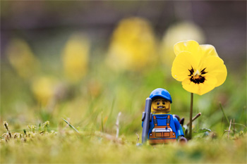 A Lego man wearing a baseball cap and holding a spade stands by a yellow flower